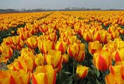 IELTS test in Holland